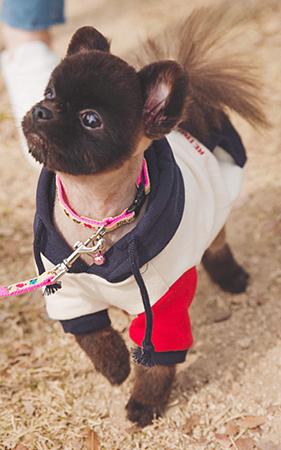 개스웩 PET 강아지 후드티셔츠
